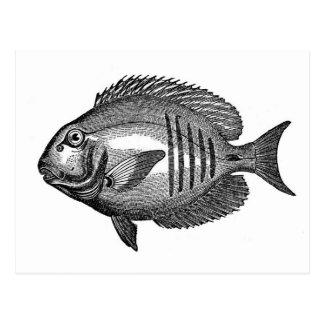 Grabado antiguo de los pescados de la historia tarjeta postal