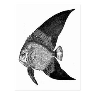 Grabado antiguo de los pescados de la historia tarjetas postales