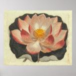 Grabado antiguo del lirio de agua, flor de Lotus Posters