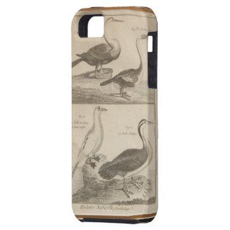 grabado antiguo del pájaro iPhone 5 carcasas