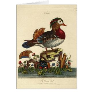 grabado antiguo del pájaro tarjeta de felicitación