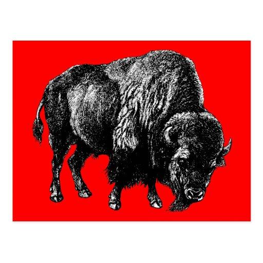 Grabado de madera del vintage del bisonte american tarjeta postal