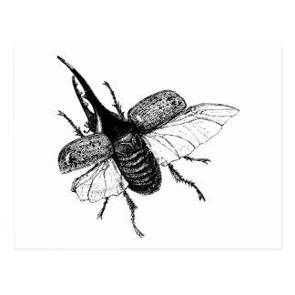 Grabado de madera del vintage del escarabajo de postal