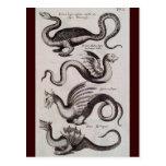 Grabado del siglo XVIII antiguo del dragón Postal