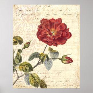 Grabado francés de la antigüedad del rosa rojo del póster