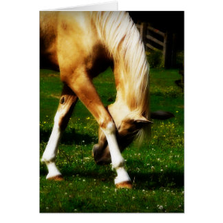 Graceful Bowing Horse Card
