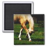 Graceful Bowing Horse Fridge Magnets