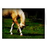Graceful Bowing Horse Greeting Card
