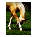 Graceful Bowing Horse Postcard