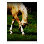 Graceful Bowing Horse Posters