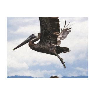 Graceful Brown Pelican Canvas Print