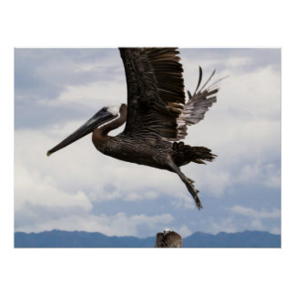 Graceful Brown Pelican Perfect Poster