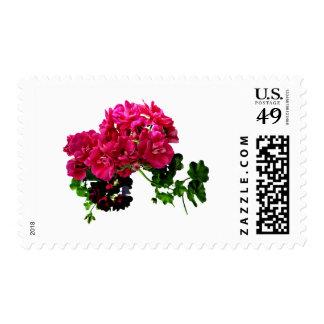 Graceful Geraniums Postage