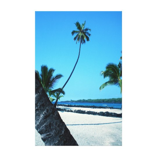 Graceful Hawaiian Palm Tree Canvas Print