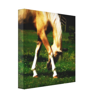 Graceful Palomino Horse Gallery Wrap Canvas