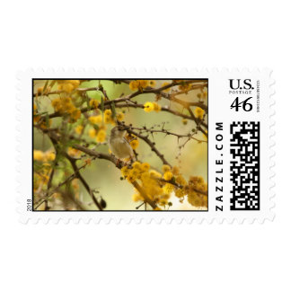 Graceful Prinia Postage Stamps