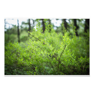 graceful shrub photo art