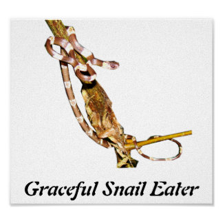 Graceful Snail Eater Posters