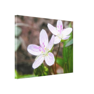 Graceful Spring Beauty Flowers Gallery Wrap Canvas