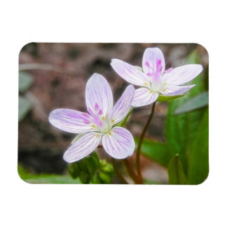 Graceful Spring Beauty Flowers Rectangular Photo Magnet
