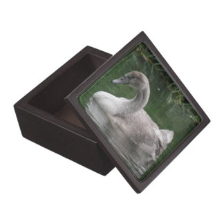 Graceful Swan on the Water Premium Gift Box