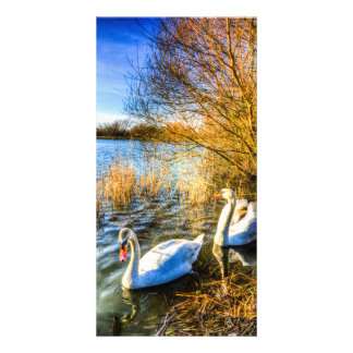 Graceful Swans Card