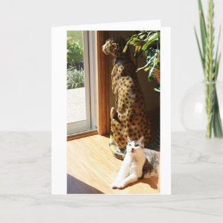 Gracey and Bad Kitty Sunbathing card
