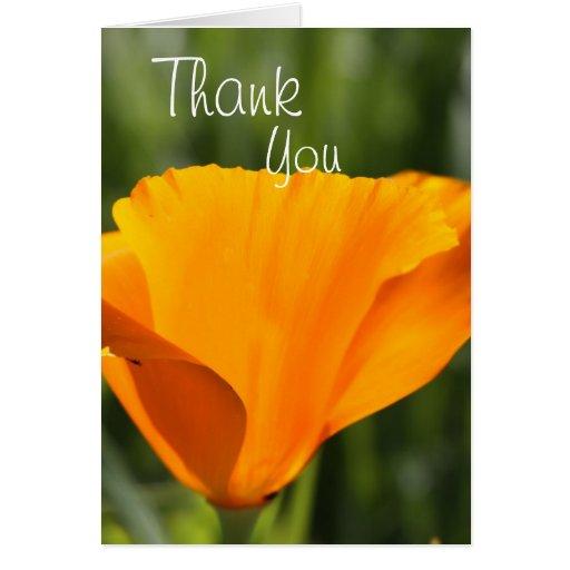 Gracias amapola felicitación
