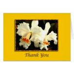 Gracias blancas mullidas de Cattleya Tarjetón
