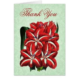 Gracias cardar con las floraciones del Amaryllis d Tarjetón