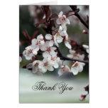 gracias cardar las flores del ciruelo tarjetas