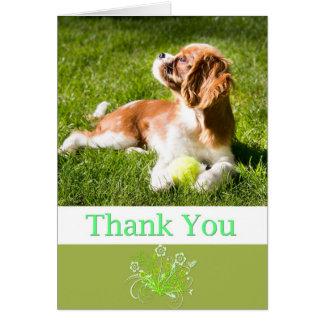 Gracias con rey arrogante Charles Card del perrito Tarjeta De Felicitación