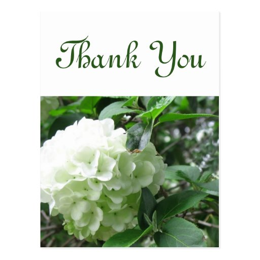 gracias la flor blanca tarjeta postal