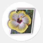 Gracias los diseños del mahalo de la hawaiana pegatina redonda