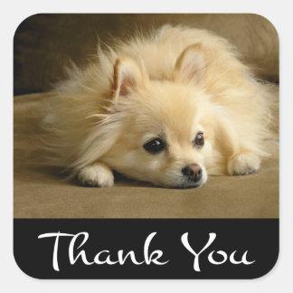 Gracias los pegatinas/las etiquetas del perro de pegatina cuadrada