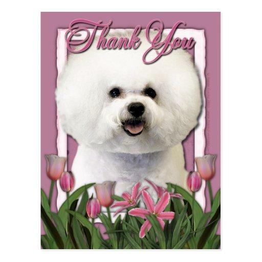 Gracias - los tulipanes rosados - Bichon Frise Tarjeta Postal