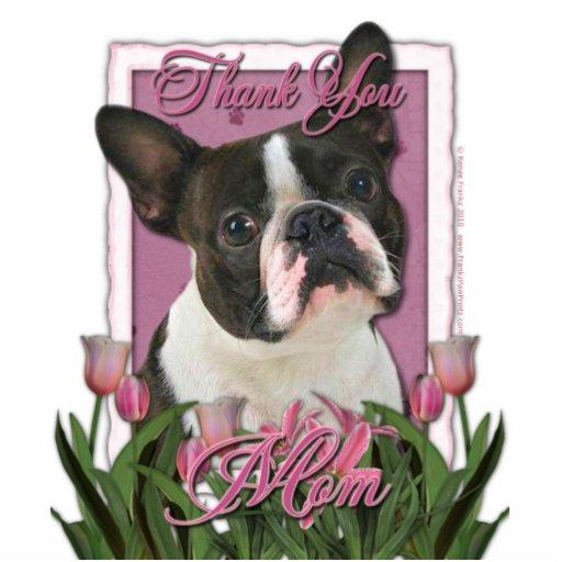 Gracias - los tulipanes rosados - Boston Terrier Escultura Fotográfica