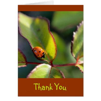 Gracias Notecard con diseño de la mariquita Tarjeta De Felicitación