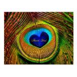 Gracias ojo de las plumas del pavo real del amor postales
