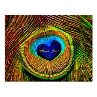 Gracias ojo de las plumas del pavo real del amor tarjeta postal