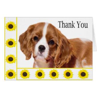 Gracias perro de aguas de rey arrogante Charles de Felicitaciones
