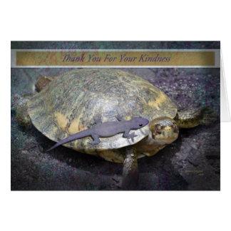 Gracias por su amabilidad - tortuga y Gecko Tarjetas