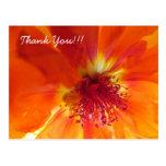 Gracias postal con la flor anaranjada