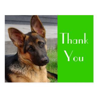 Gracias postal del perro de perrito del pastor ale