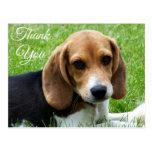 Gracias postal del saludo del perro de perrito del