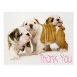 Gracias postal inglesa de los perros de perrito de