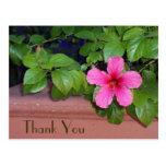 Gracias postal rosada de la flor