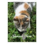 Gracias tarjeta de felicitación del gato de calicó