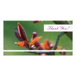 Gracias tarjeta de la foto tarjeta fotográfica