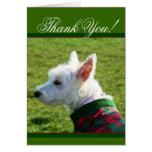 Gracias tarjeta de Terrier blanco de montaña del o